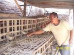 Pak Ende memperluas usaha ternak ayak berkat bantuan dan pendampingan YaBISA
